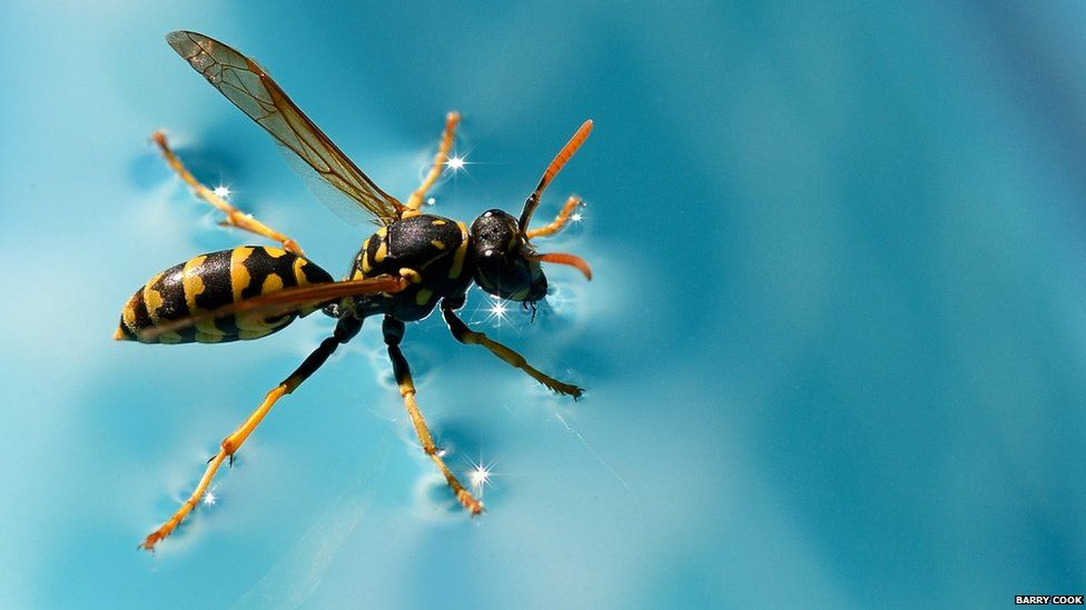 Wasp on a swimming pool