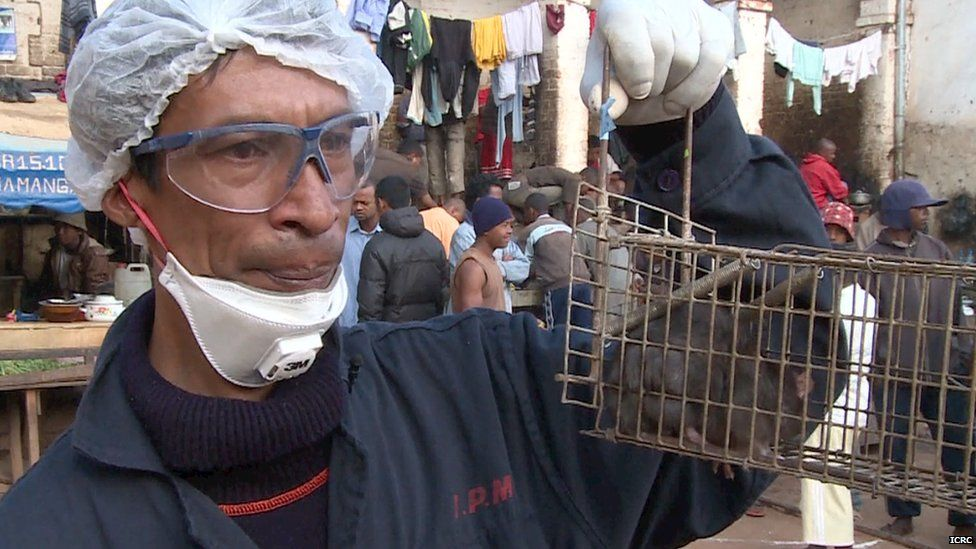 Aid worker with captured prison rat (file photo)