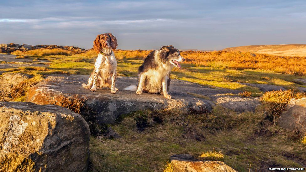 Two dogs in the Peak District