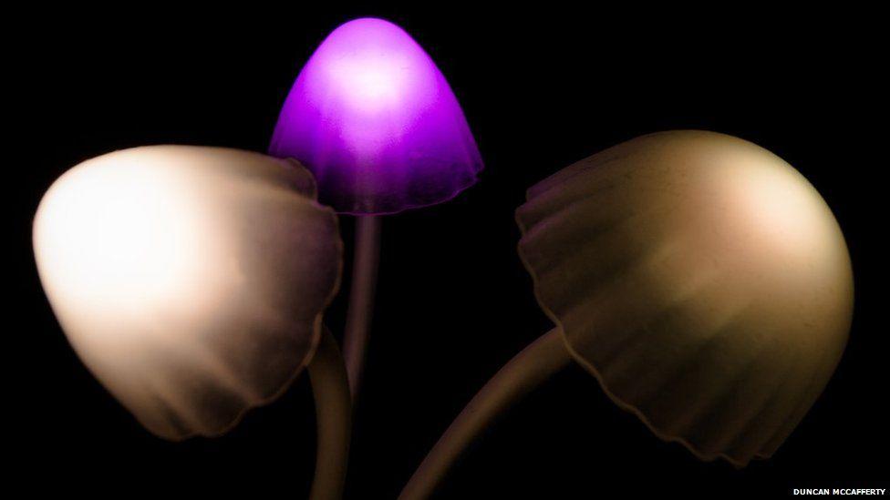 Mushroom-themed nightlight
