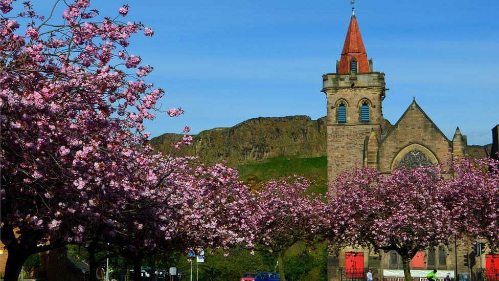 Cherry blossom at Kirk O'Field Parish Church in Edinburgh