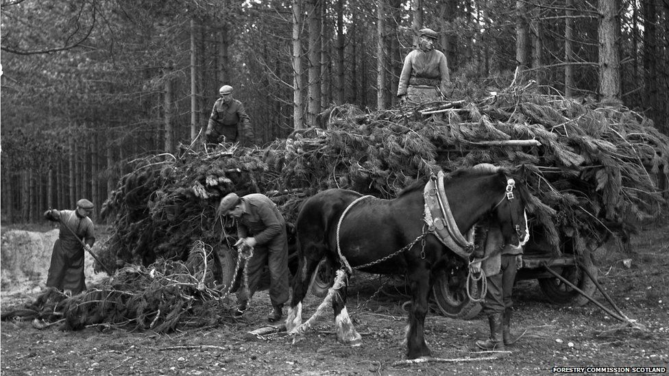 Forestry work at Culbin