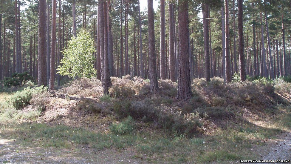 Hidden History area at Culbin Forest