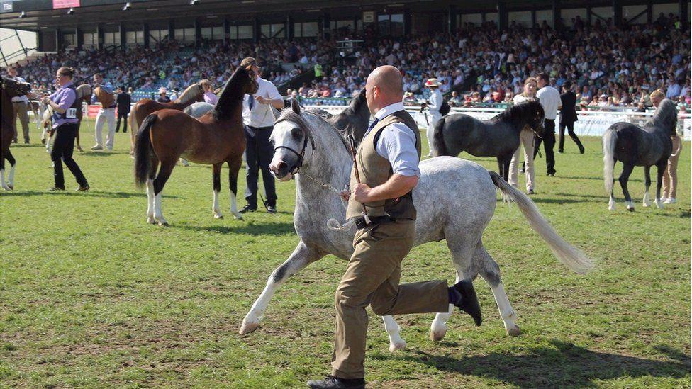 Yr eisteddle'n orlawn ar gyfer cystadleuaeth y Cobiau. // The grandstand's full to the brim for the Welsh Cob competition.