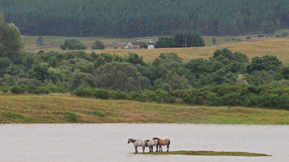 stranded horses