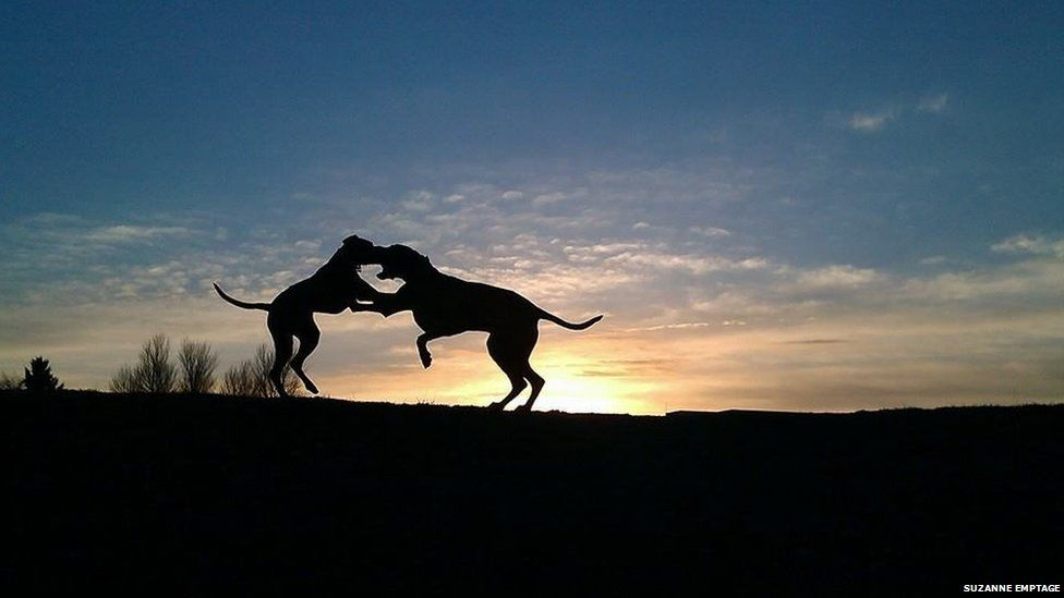 Dogs playing in the early morning sun