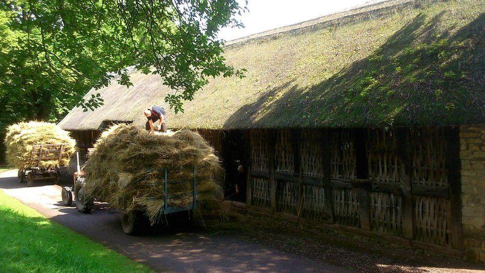 Casglu gwellt ar gyfer Bryn Eryr // Collecting hay for the Bryn Eryr site