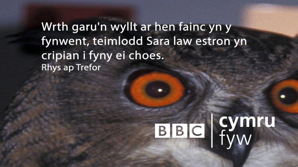 Wrth garu'n wyllt ar hen fainc yn y fynwent, teimlodd Sara law estron yn cripian i fyny ei choes.