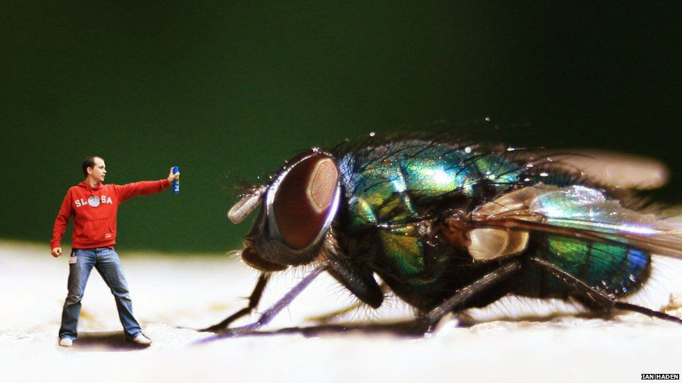 Man and large fly
