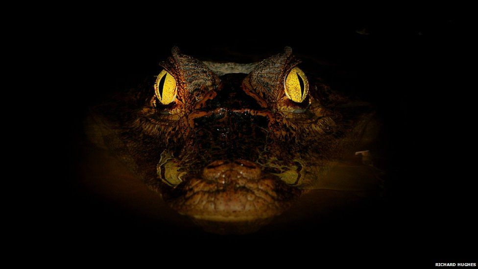 Face in the dark