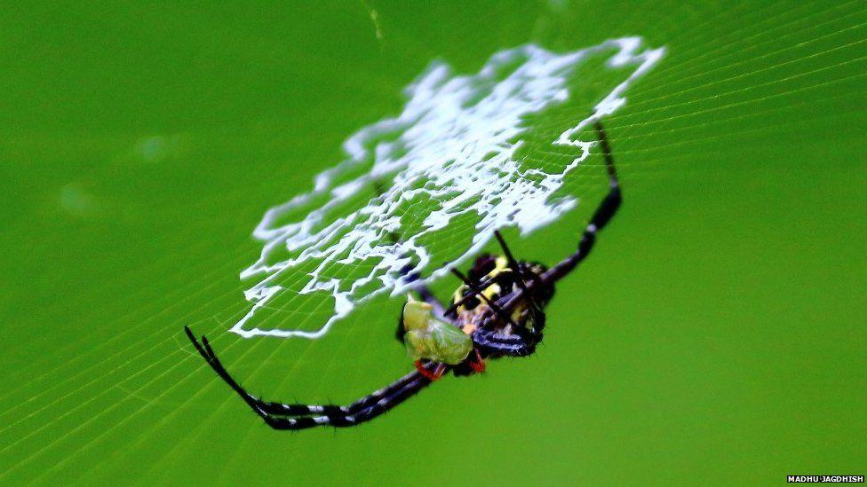 Signature spiders