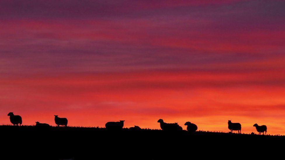 Sunset over Cambusbarron