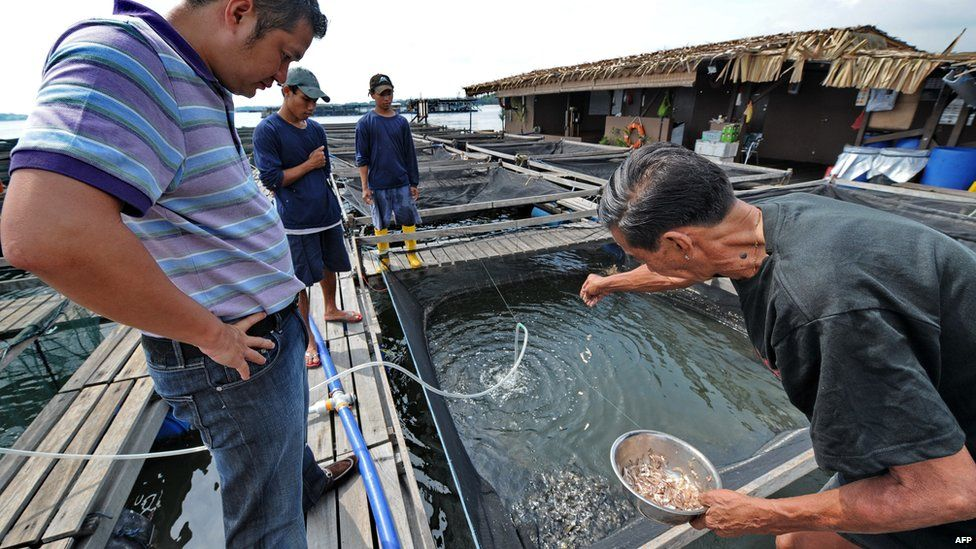 This photo taken on 26 March 2010 shows Singaporean property developer Eric Cheng (L) watching as a worker feeds the fish on his floating farm in Singapore.