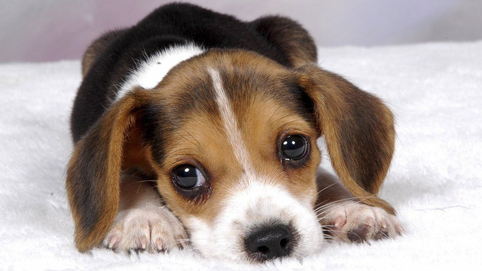 Why we can't resist puppy dog eyes