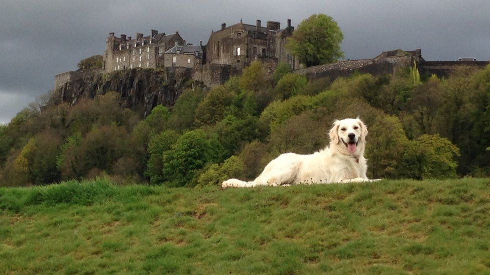 Dog in front of Stirling Castle