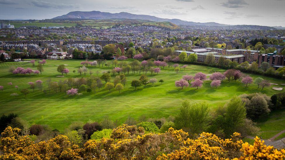 Cherry blossom trees in Edinburgh