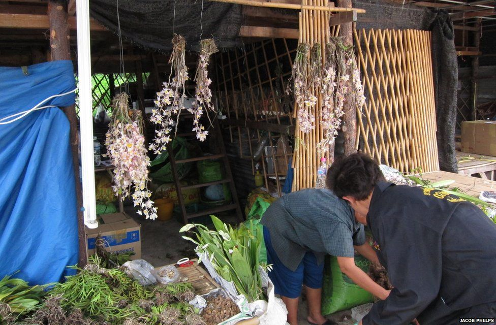 People working at an orchid market