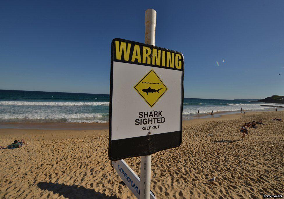 Shark warning on beach in Australia