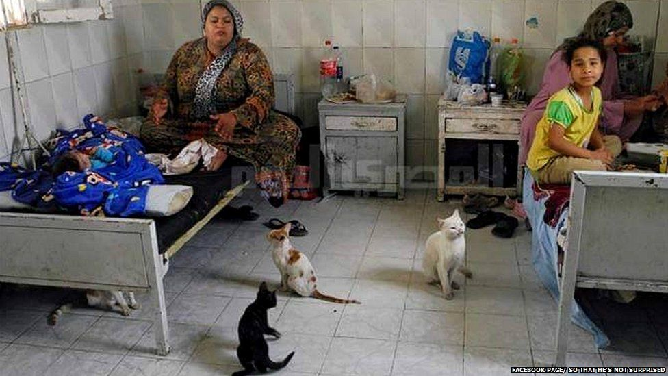 A family sits on hospital beds surrounded by cats