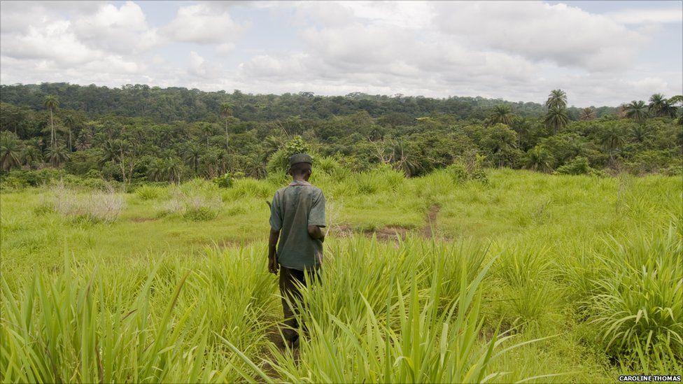 The path between the villages of Sengema and Jemgbellu