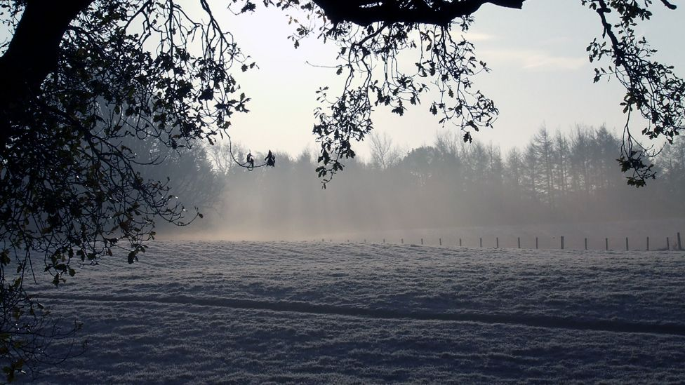Early morning frost on a field of grass