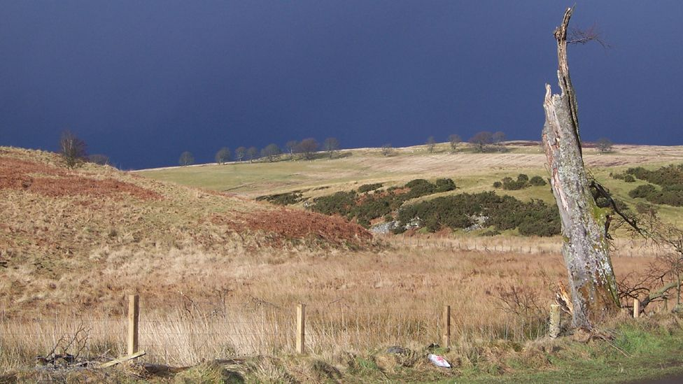 Tree and fields in Sheriffmuir