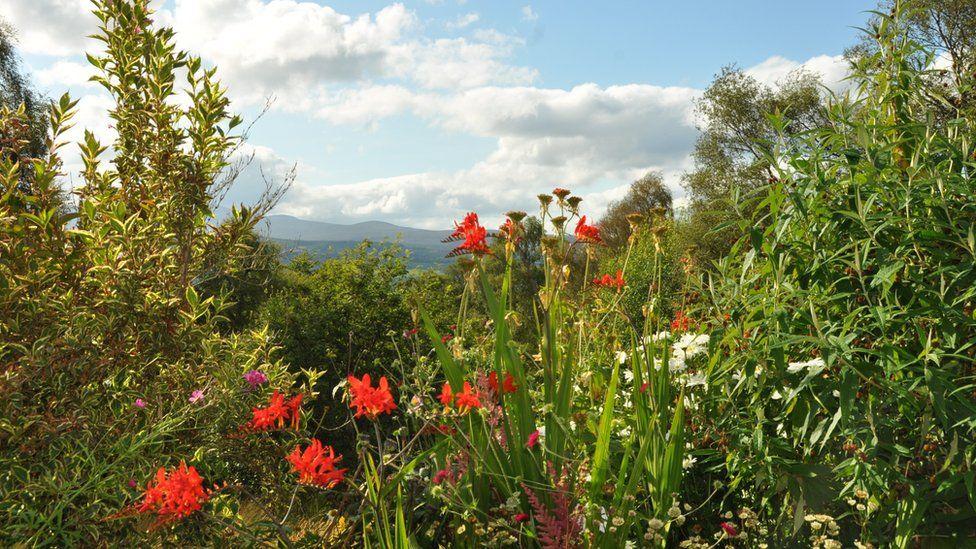 Charlie's garden near Kiltarlity