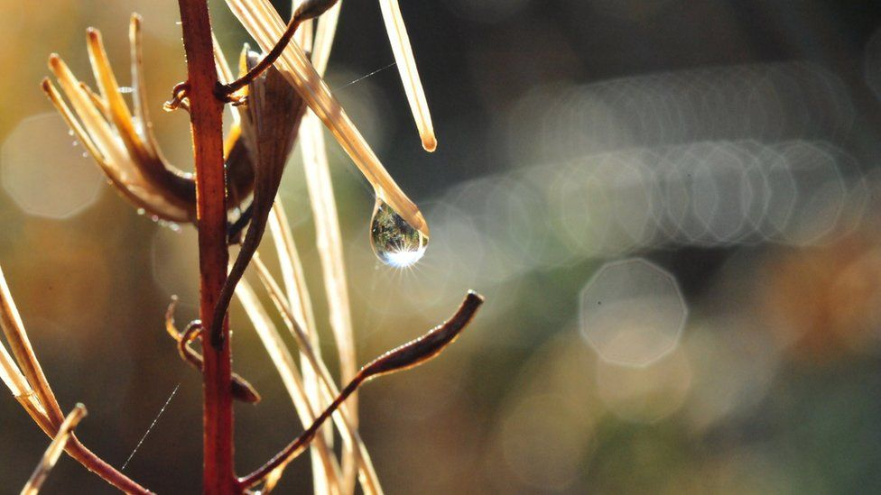 Dewdrop on a plant