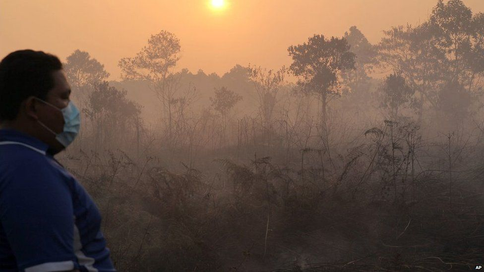 Smoke billows from a forest fire in Pekanbaru, Riau province, June 22