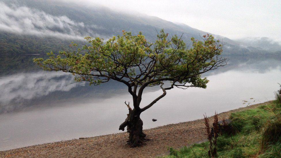 Tree on the banks of Loch Lomond