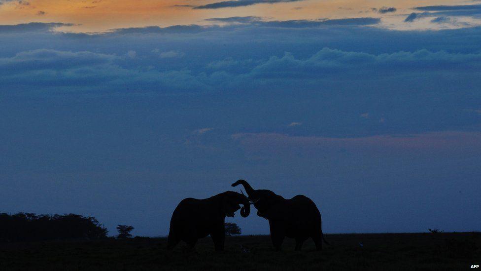 Elephants in Amboseli National Park, Kenya - Monday 7 October 2013
