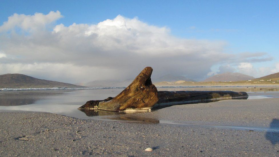 Washed up tree on Seilebost beach