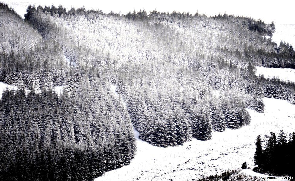 Snow covers the trees at Kielder in Northumberland