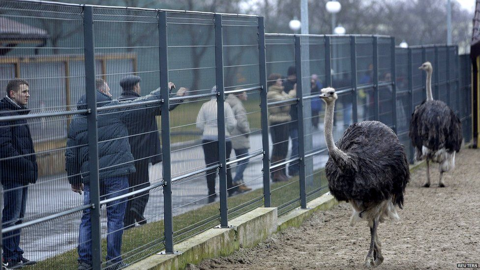 Private zoo