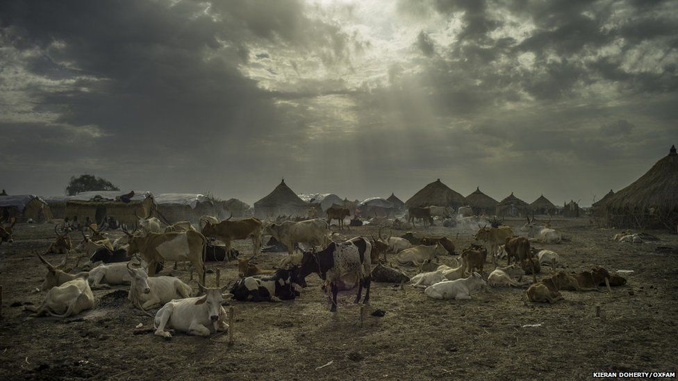 Cattle and smoking dung in Melut, South Sudan