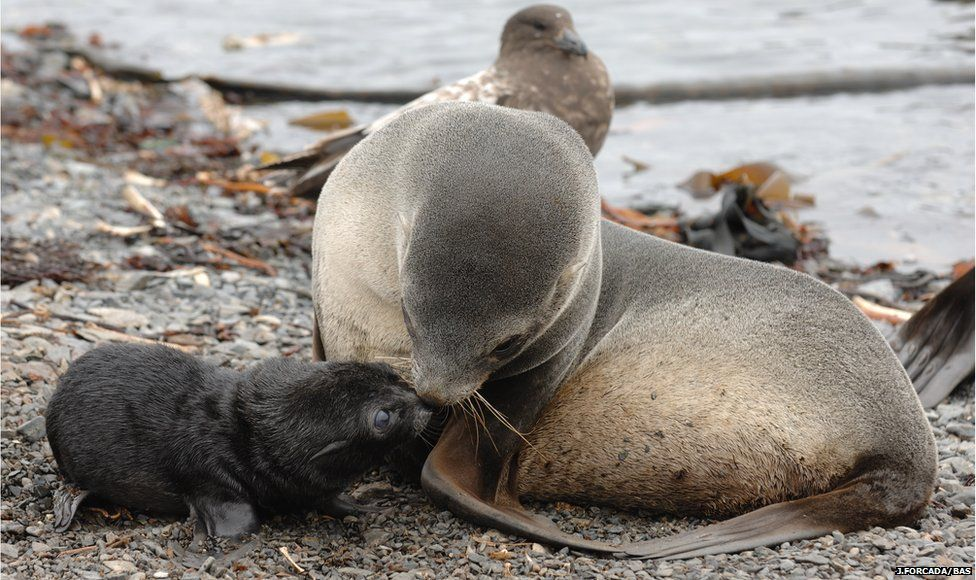 Mother and pup