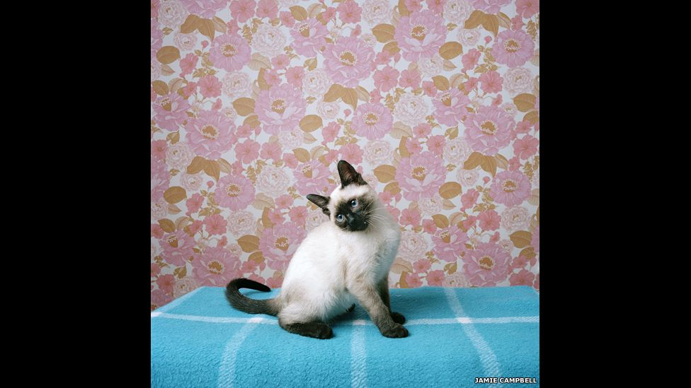 Bea, in Anita's old room,