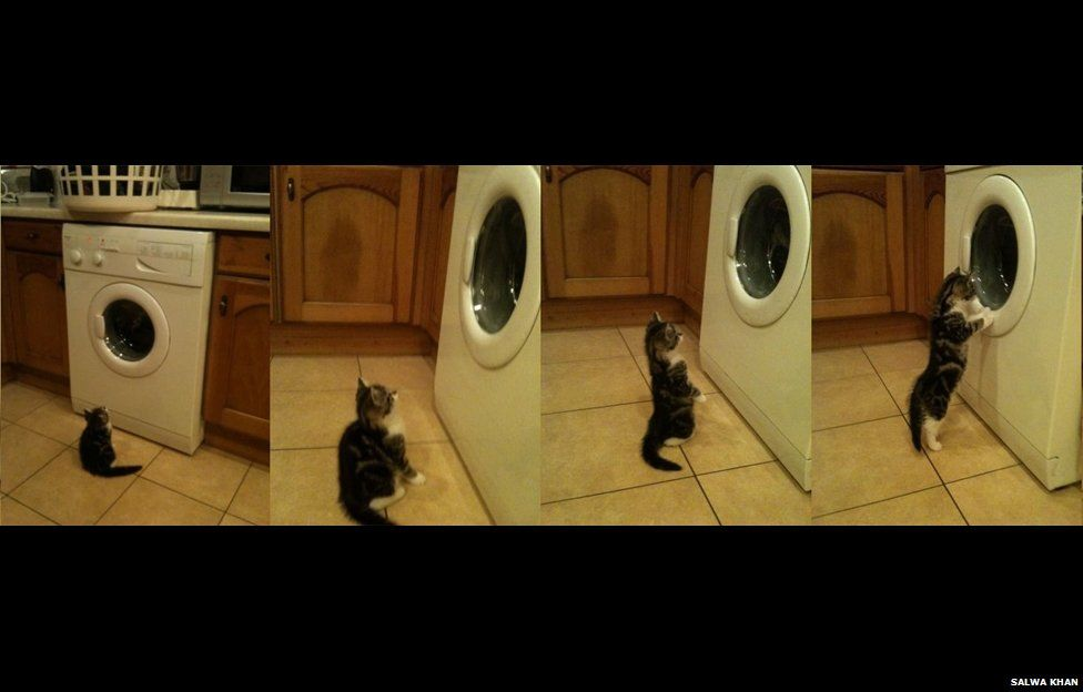 Cat watching a washing machine