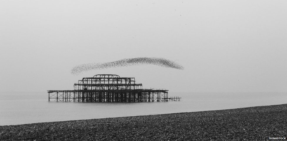 starlings over the West Pier at Brighton