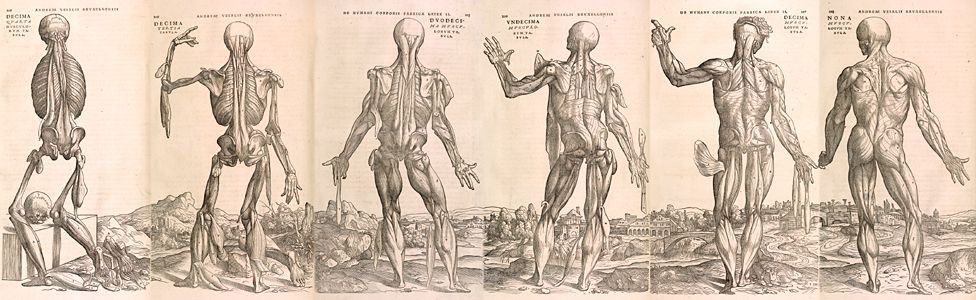 Wood cut prints from the Fabrica - 16th Century medical book by Andreas Vesalius