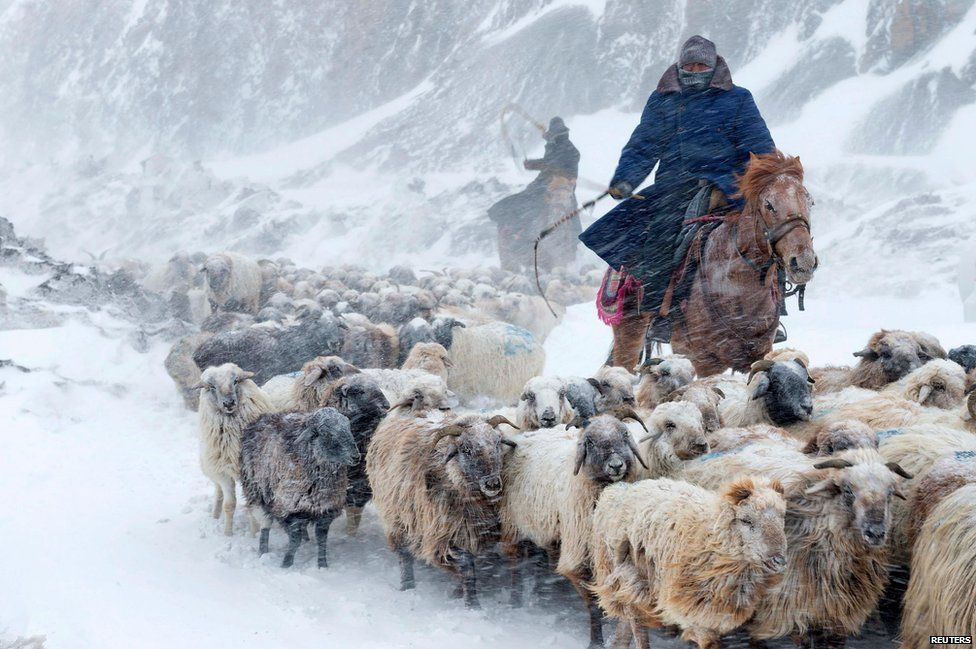 Kazakhs herd their sheep