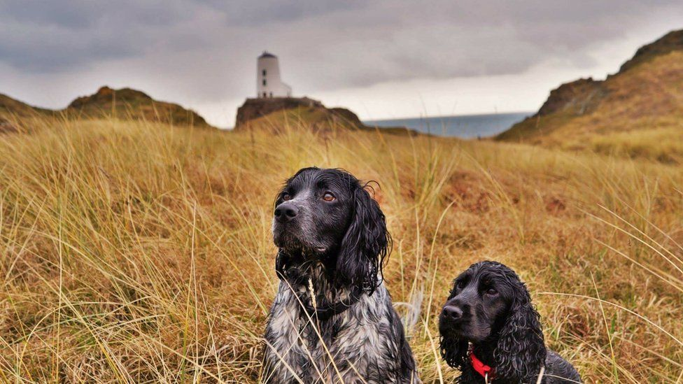 These attentive dogs at Newborough Beach on Anglesey were captured by Katie Ellis from Old Colwyn