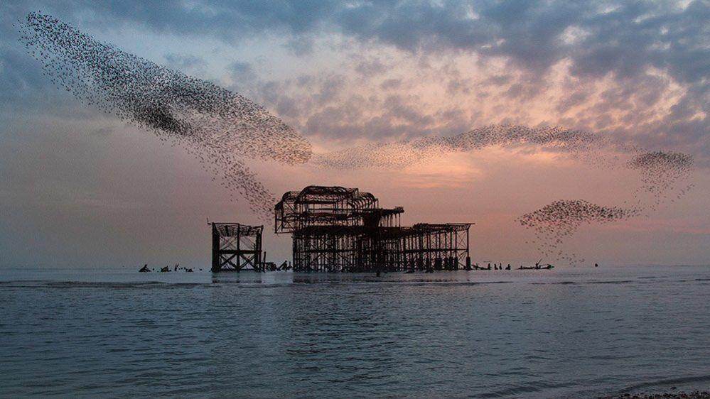 Brighton pier and a murmuration