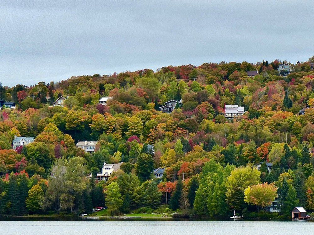 Colourful trees in Canada