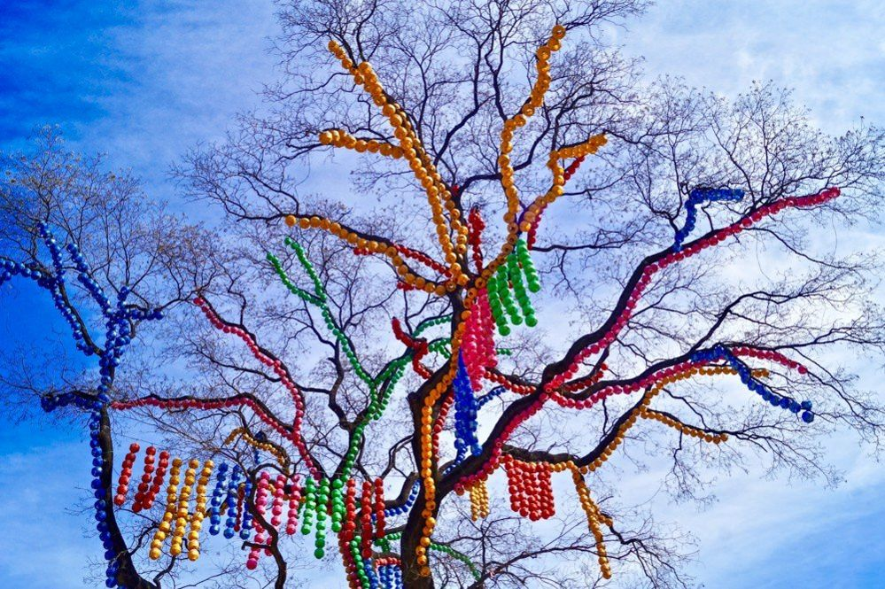 Lanterns in a tree