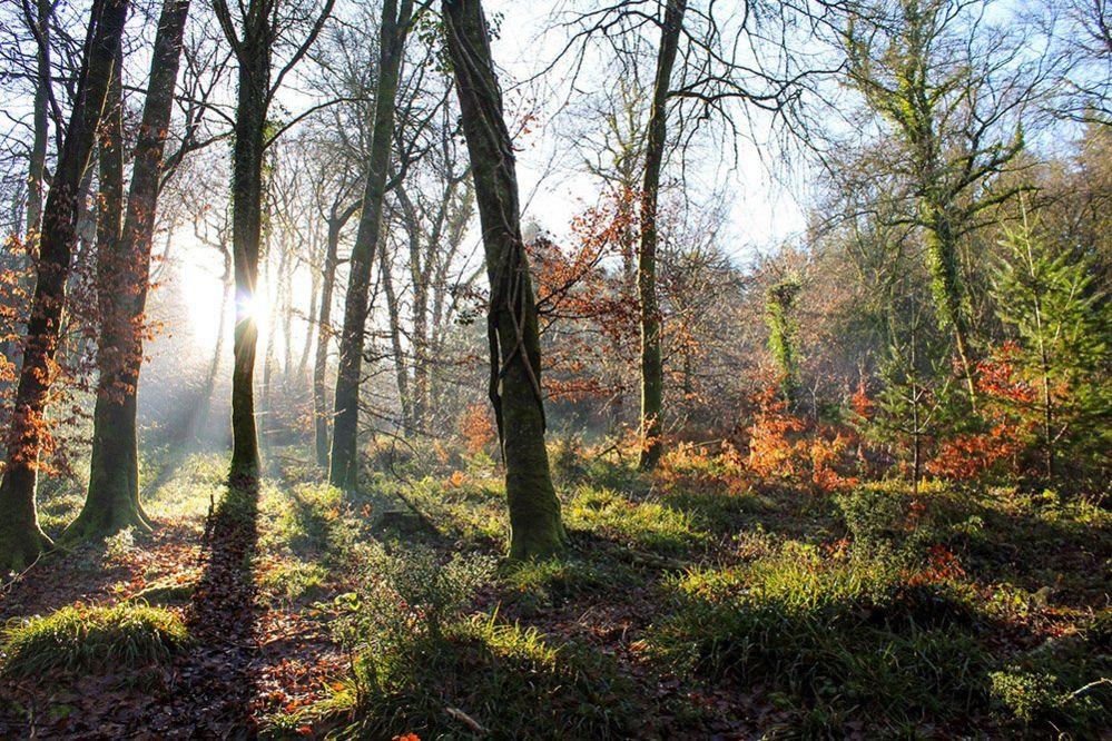 Trees in Devon