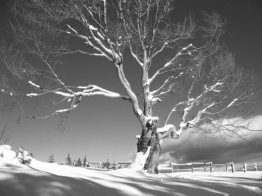 A tree in snow
