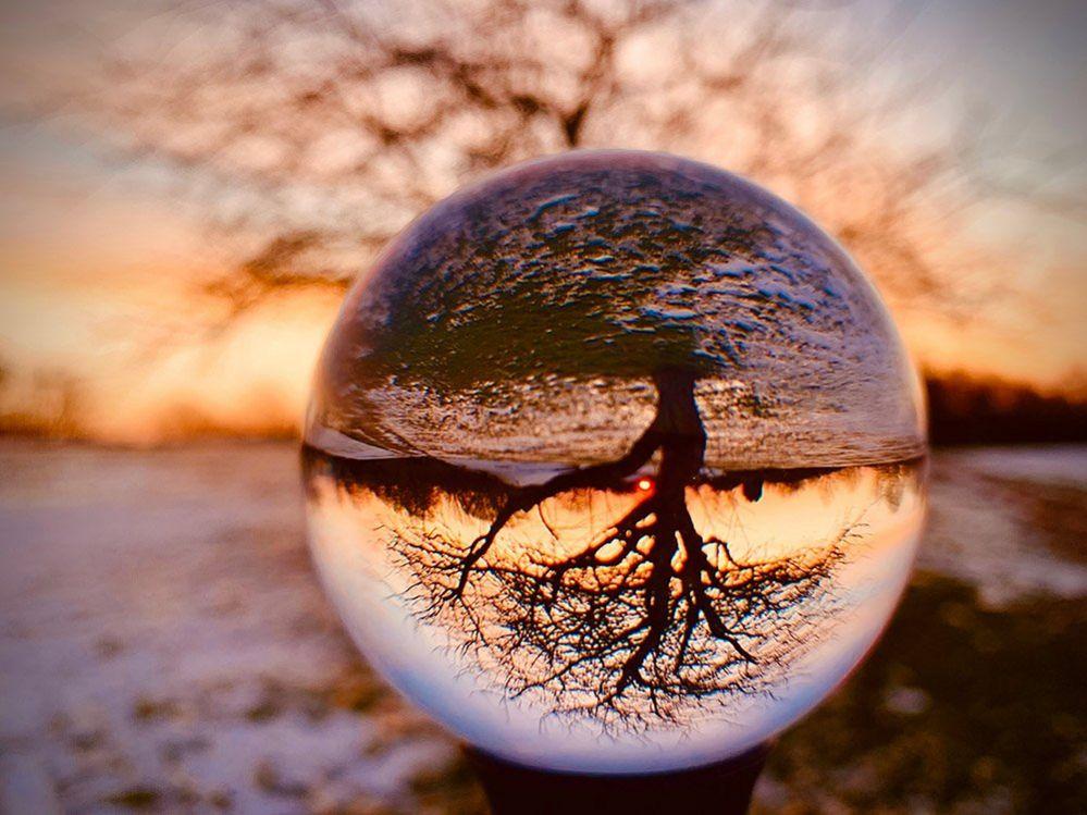 Tree through a lensball