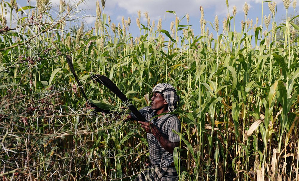 A man chases away locusts from his crops