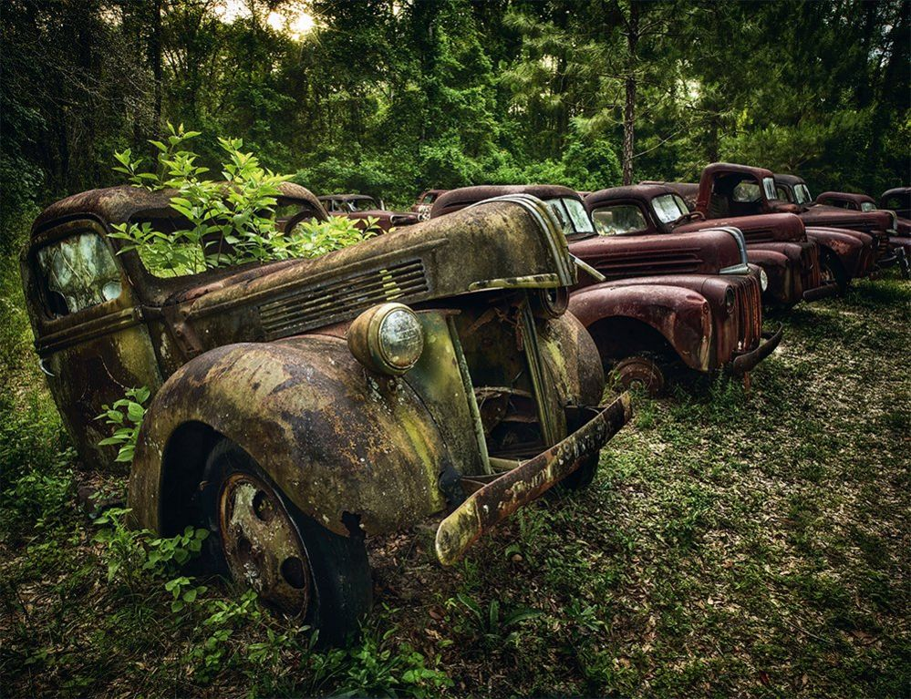 A line of abandoned cars in a forest